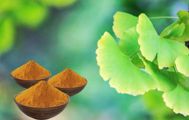 EP9.0 Low Ginkgolic Acid Ginkgo Leaf Extract With GCAP Planting Base