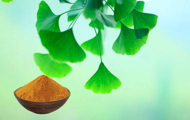 Pharmaceutical Grade Ginkgo Biloba Extract With Food Grade Ethanol Extraction