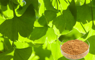 USP40 Ginkgo Leaf Extract , Ginkgo Biloba Powder For Food Supplement