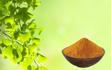Skin Care Ginkgo Biloba Extract Powder For Relieving Eye Fatigue