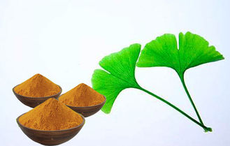 Chp 2015 Ginkgo Biloba Standardized Extract With Advanced Extraction Technology